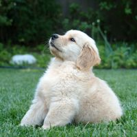 Basic Puppy Training Made Easy. Hopefully will need this in the near future... I need a puppy!