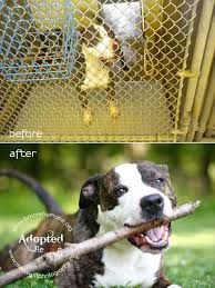 Rescue=Your Bestest Friend ever!