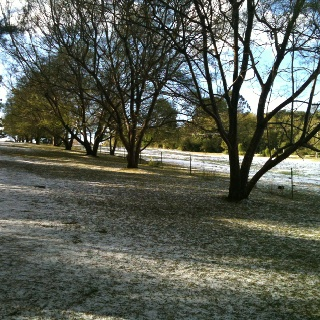 Not now - but a little earlier in the season on Mt Tamborine.  It certainly was an event to see snow here!