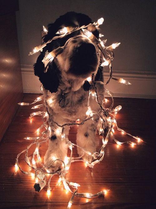 Zepetit http://zepetit.tumblr.com Dog