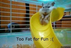 Too fat for fun