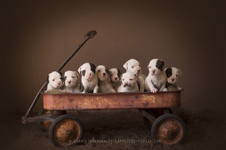 17 best images about puppy photography on pinterest