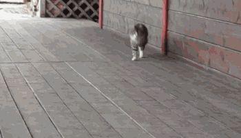 Classy Cat, Sneaky Cat, Pompous Cat