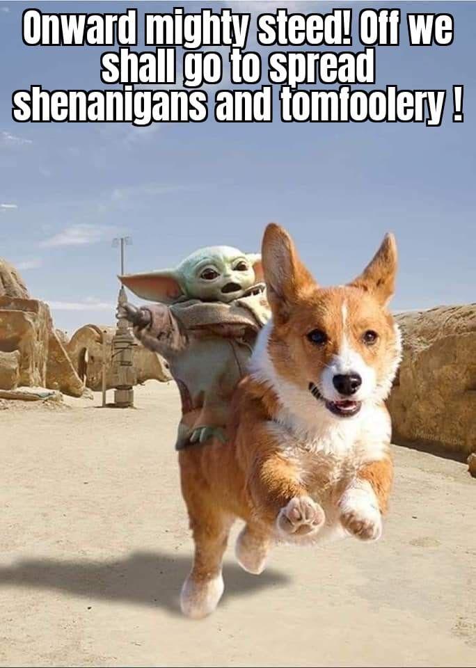 Pin By Diana Albrecht On The Child Aka Baby Yoda Star Wars Memes Funny Star Wars Memes Yoda Funny