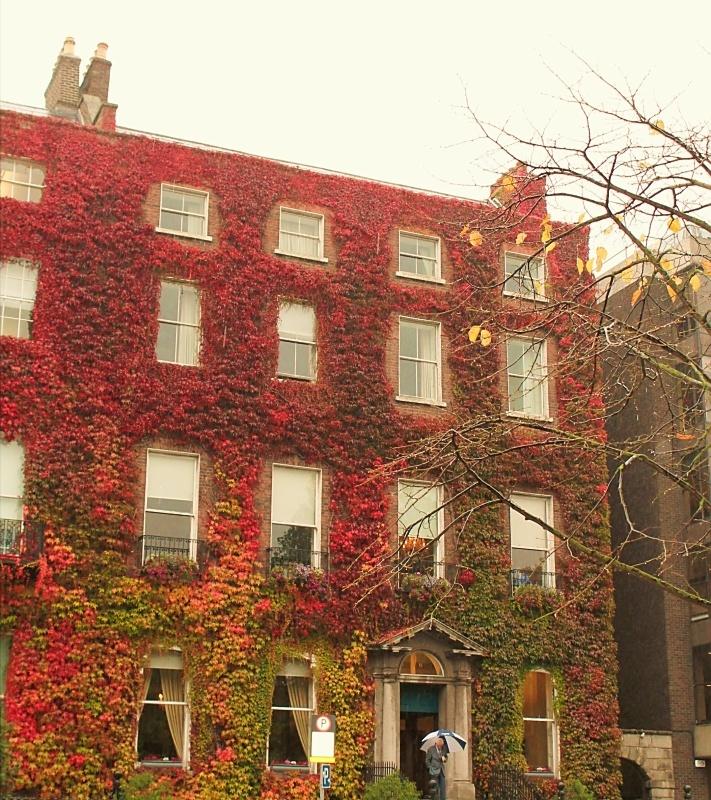 Fall beauty/Dublin, Ireland