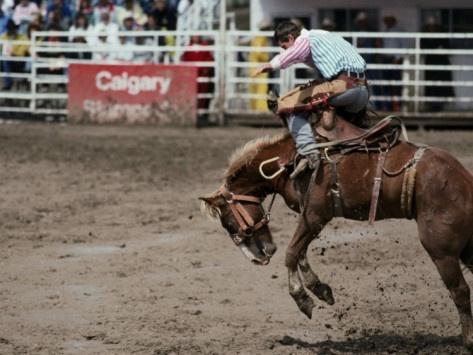 Calgary Stampede.