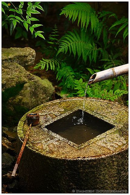 "Ryoanji's ""tsukubai"" basin, Kyoto, Japan | Flickr - Photo Sharing!"