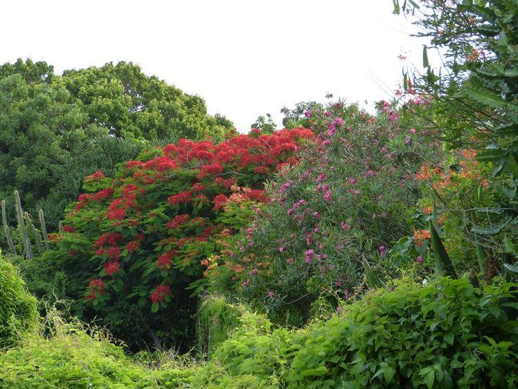 Sint Eustatius (Statia) Urlaub günstig buchen - Karibiksport