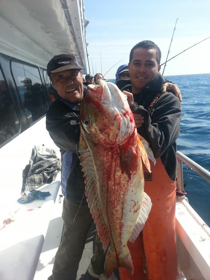 17 best images about capt lou fishing trips on pinterest for New york fishing
