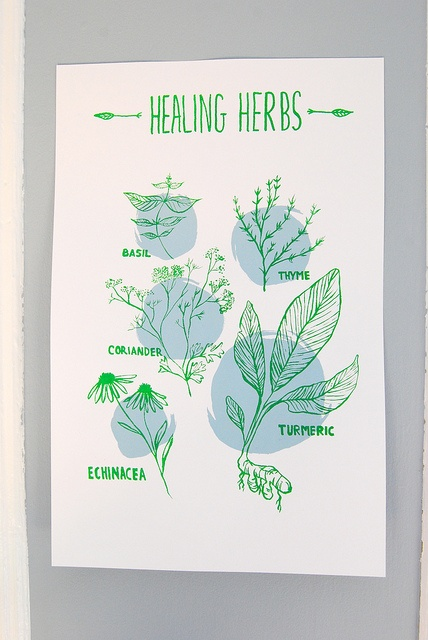 """Healing power in your FOOD!    I love food & own too many cookbooks. One of them inspired me to draw some herbs that have healing benefits.    Could only fit a handful:  - Basil  -Thyme  -Coriander  -Turmeric  -Echinacea    11"""" x 17""""  67 lb cover stock white pap Cures in the garden"""