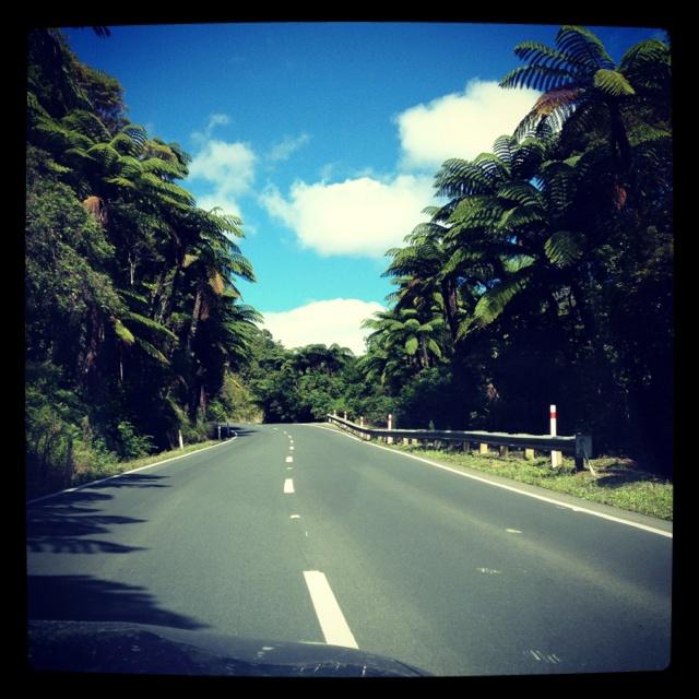 mangamuka gorge - far north NZ!