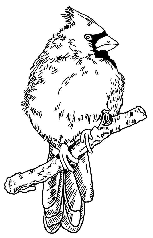 Cardinal bird coloring page
