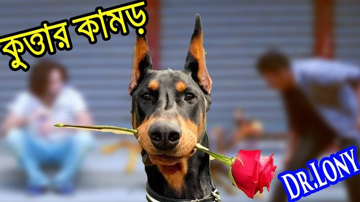 Bangla Funny Dog Videos Try Not To Laugh | Bangla Funny Video | Dr Lony ...