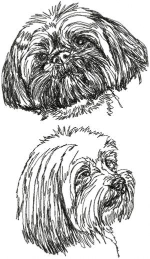 Advanced Embroidery Designs - Lhasa Apso Set