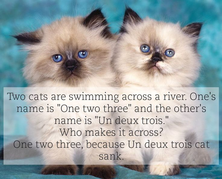 You won't understand unless you speak french. It is kinda sad but funny at the same time because of the pun!