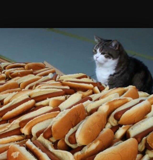 The 25 best meme template ideas on pinterest blank memes oc cat hotdogs blank meme template pronofoot35fo Images