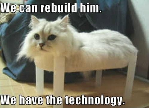 LOL  I love funny Cat pictures!
