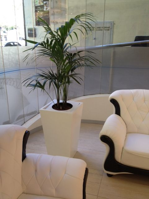 We make sure to create best atmosphere for you by providing indoor plants and installing them at Foliage Indoor Plant Hire. This is best place to solve all your queries related to plants.