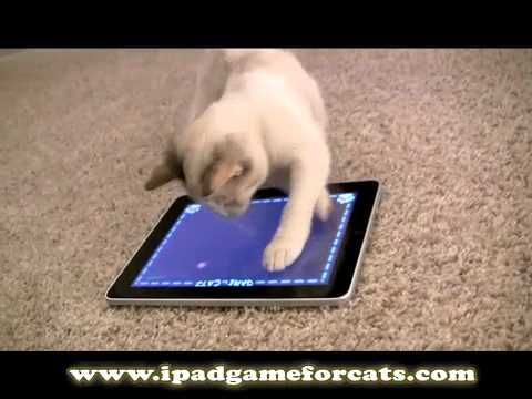 iPad Game for Cats: The World's Greatest Video Game (for cats, not humans)