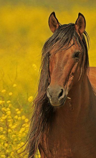 ♂ Wildlife photography animal horse #horse #animals Mustang Stallion