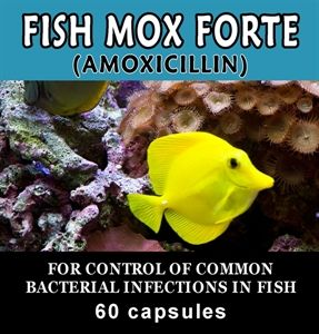 291 best survival skills techniques images on pinterest for Where can i buy fish mox