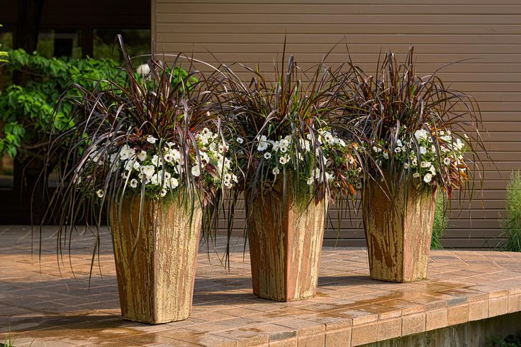 Graceful Grasses 174 Vertigo 174 Purple Fountain Grass