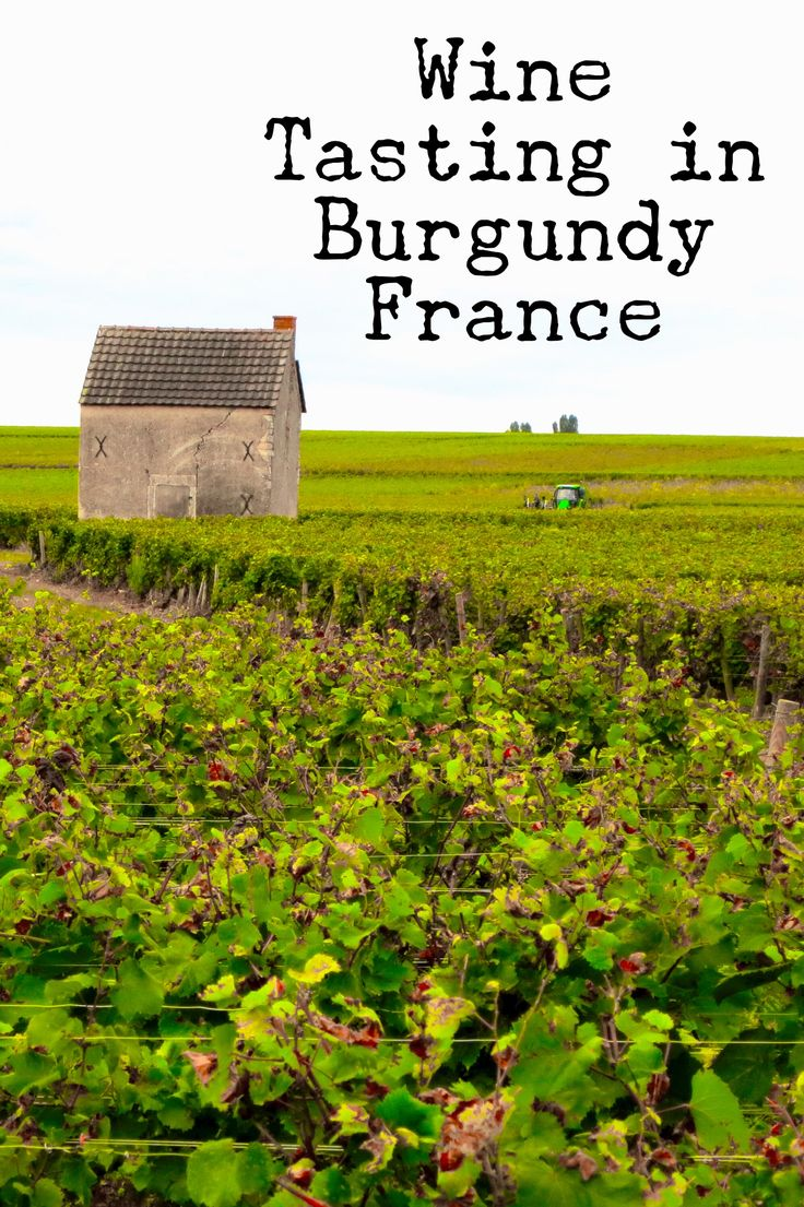 Burgundy is famous for making some of the best wine in the world. It's a wonderful region in France with rolling hills and lot of great wine to taste.