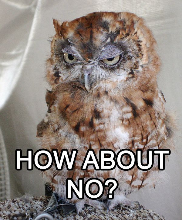 This face just makes me laugh. And it resulted in me spending another 15 minutes looking up other funny owl memes...