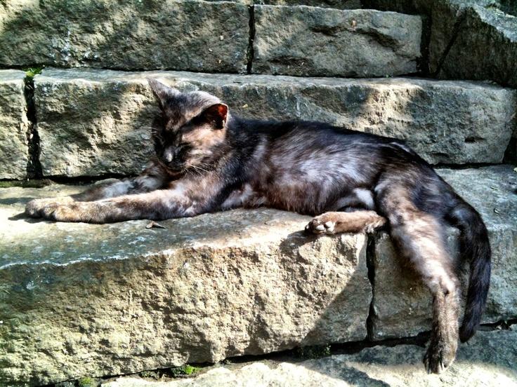 境内の眠り猫  Sleep cat of precincts