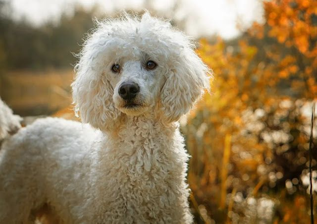 6 Of The Most Smartest Dog Breeds The Buzz Land Friendly Dog
