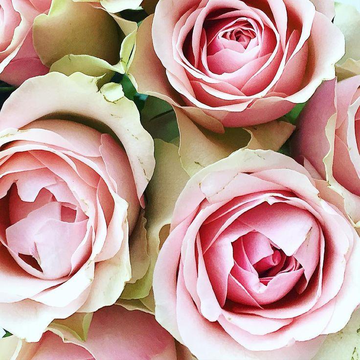 Wetter Roses
