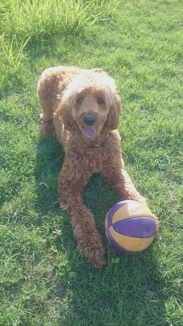 Zara loves her Basketball 🏀