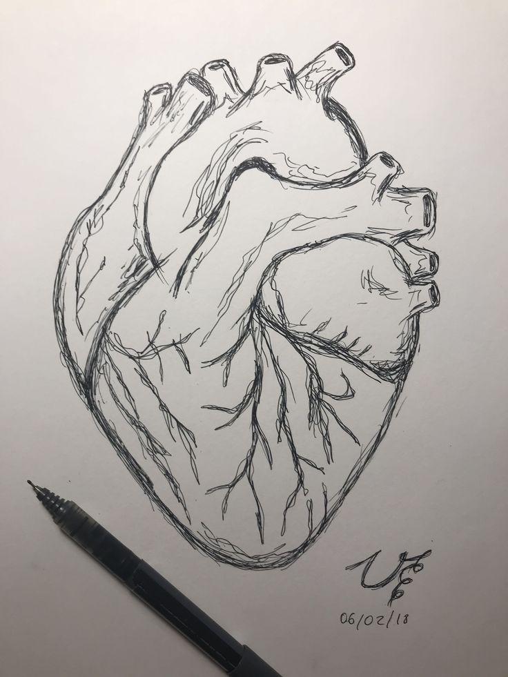 Human heart drawing