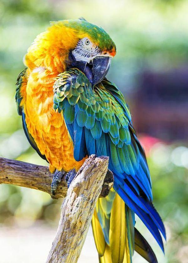 toller Papagei mit bunten Federn