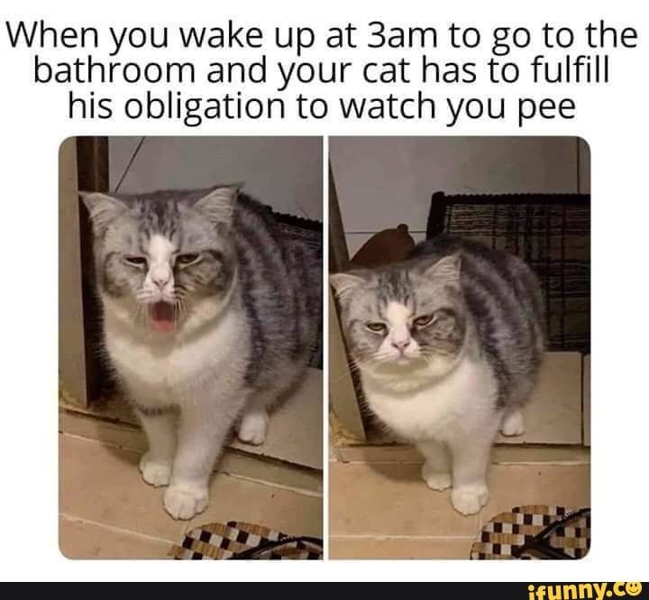 When You Wake Up At 3am To Go To The Bathroom And Your Cat Has To Fulfill His Obligation To Watch You Pee Ifunny Funny Cat Memes Funny Animal