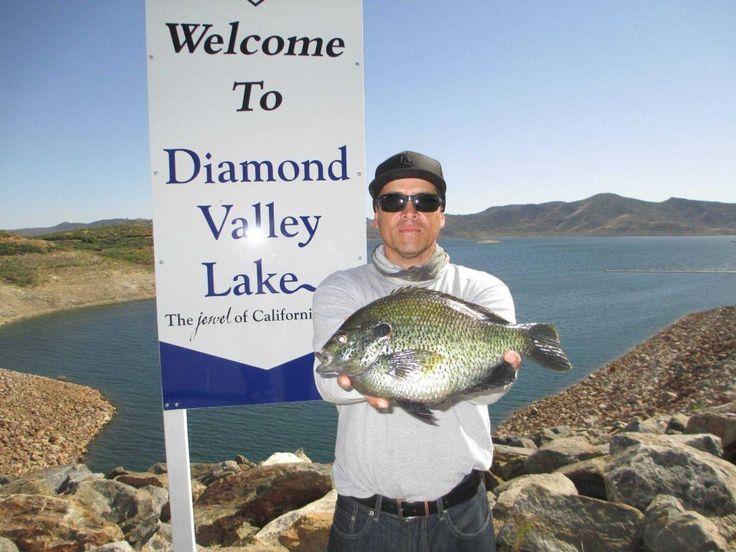 157 best bluegill fishing images on pinterest fishing for Lake perris fishing report