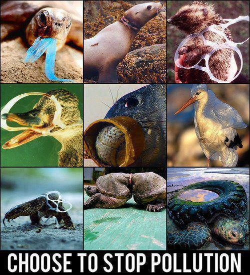 stop pollution - save the seas - save the animals - save the earth.