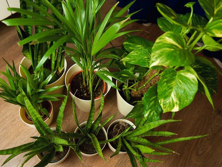 Plants in fighting smog