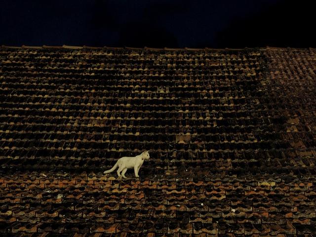 Gato en el Tejado. Centro de Palizada en el estado de Campeche, México