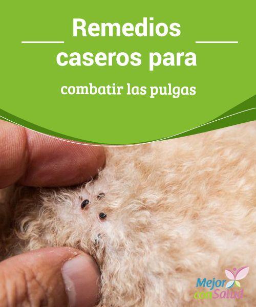 Los remedios caseros más eficaces para combatir las pulgas Para combatir las pulgas hay unos productos naturales que pueden emplearse de diferentes formas, directamente en nuestras mascotas, también en el hogar.