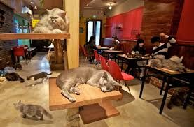 The Cat Cafe In London!!