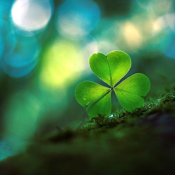 ♥ The three leaf clover represents the trinity: Father, Son and Holy Ghost.