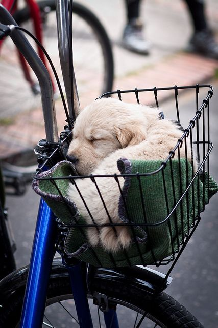 Puppy in a basket? OK.