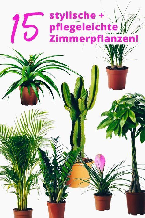 Der Pflanzen-Guide: 15 stylische und pflegeleichte Zimmerpflanzen ...