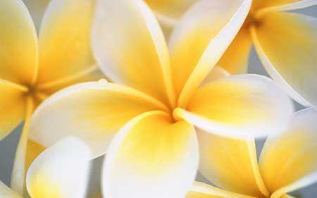 Flor Amarela: Nomes, Significados, Fotos de Flores Amarelas