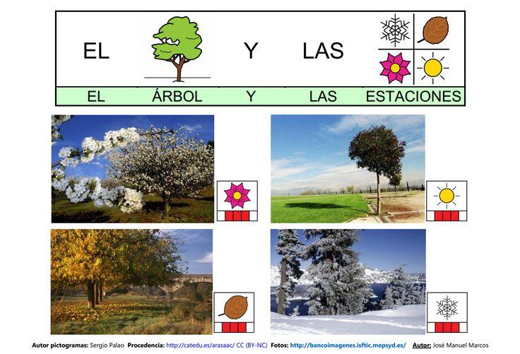Mapa semántico sobre el Árbol (lámina 6), A través de esta actividad, podremos trabajar la comprensión y la expresión oral, así como la adquisición de vocabulario. http://informaticaparaeducacionespecial.blogspot.com.es/2009/03/actividades-generadas-partir-del-mapa_20.html