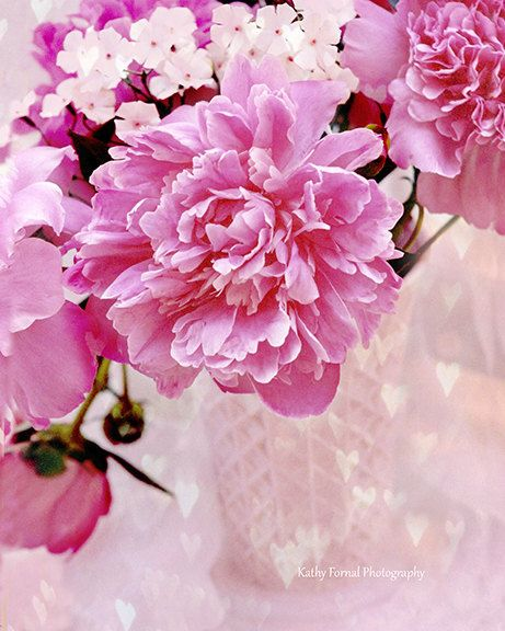 The Pink Peonies 82 best my peonies photography images on pinterest | pink peonies