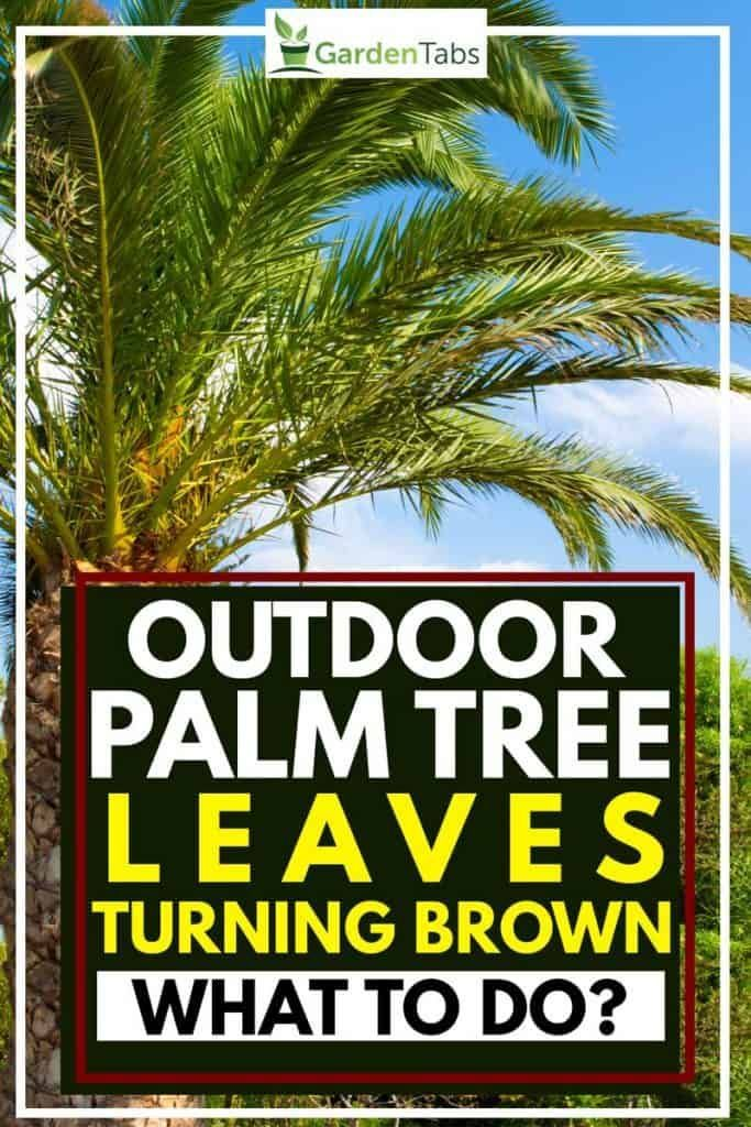 Outdoor Palm Tree Leaves Turning Brown What To Do In 2020 Palm Tree Leaves Palm Trees Landscaping Tree Leaves