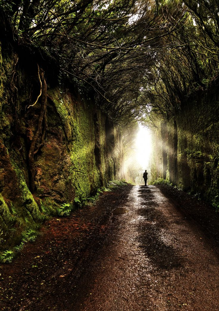 Forest - Tenerife - Canary Islands - Spain