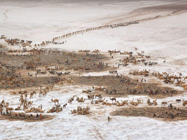 Caravans at the salt mines, Lake Asele, Ethiopia, by George Steinmetz.